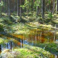 В весеннем лесу :: Павлова Татьяна Павлова