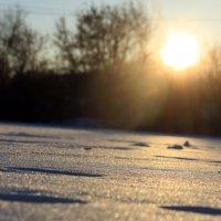 Солнечные денечки :: Кристина Щукина
