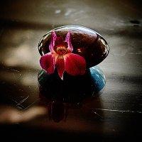 Цветочек аленький(Чудище в комплект не входит) :: Val Савин
