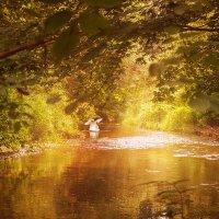 А белый лебедь на пруду... :: Yevgeniy Kolesnikov
