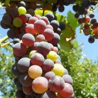 Вкусные ягодки! :: Наталья