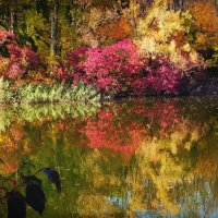 ..лес Нарцисс.. :: Ирина Сивовол