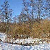 Измайловский лесопарк. :: Oleg4618 Шутченко