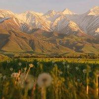 Про одуваны, горы и закат дня... :: KateRina ***