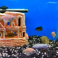 На аквариумном дне :: Milocs Морозова Людмила