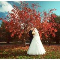 Молодожены под красным деревом :: Георгий Трушкин