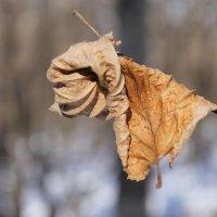 листок на снегу :: Никита *