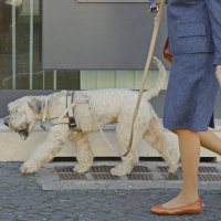 Смело товарищи, в ногу! :: M Marikfoto
