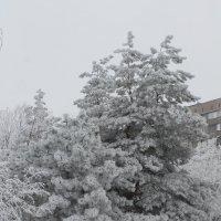 Красавица елочка :: Valentina Patalakh