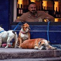 С собаками вход запрещен... :: Roman Mordashev