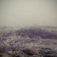 В тумане :: Tanika Неделенко