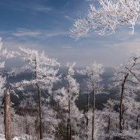 frozen forest :: Dmitry Ozersky