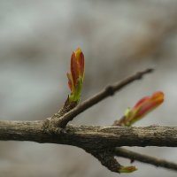 Весна пришла :: Светлана marokkanka