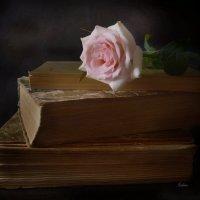 Цветок розы нежной :: Галина Galyazlatotsvet