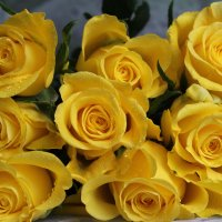 Жёлтые розы :: Mariya laimite