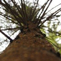 Дерево как мир :: Артем Рязанцев