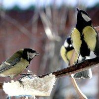 Птичьи разборки :: Елена Шемякина