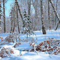 Про нетронутый снег :: Сергей Черных