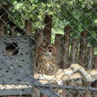Zoo :: Настя Усик