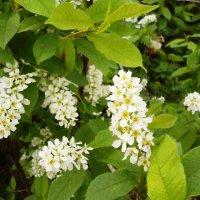 Воспоминание о весне :: Mary Коллар
