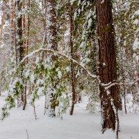Зимний лес :: Алексей Агалаков
