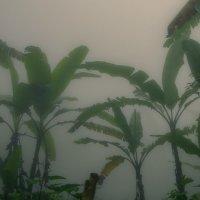 туман2 :: Александр