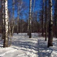 Img_2298 - Вариации на тему приближения Весны :: Андрей Лукьянов
