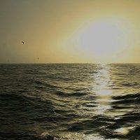 Птицы на закате :: Михаил Лобов (drakonmick)