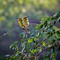 Птички :: Андрей Качин