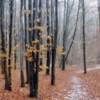 в туманном лесу... :: юрий иванов