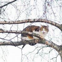 Кот прилетел :: Юрий Бичеров