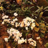 Орхидеи :: Владимир Болдырев