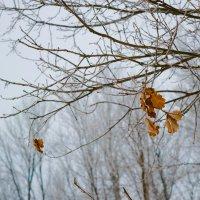Последние листья :: Alex Urb
