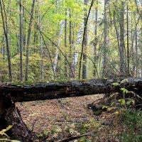 Утро в осеннем лесу :: Татьяна Ломтева