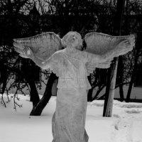Angel :: Дмитрий Чулков