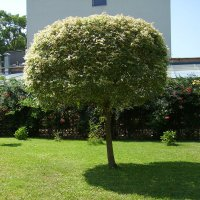 Декоративное  дерево  в  Ивано - Франковске :: Андрей  Васильевич Коляскин