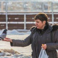 кушай милый голубок, голубочек мой :: Дмитрий Сушкин