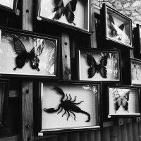 метелики) :: Ілона Орлова
