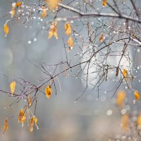Осенняя капель :: Мария Шустова