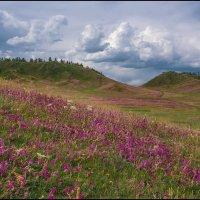 цветущие горы... :: Наталья Маркова