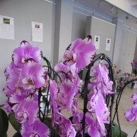 орхидеи :: Людмила