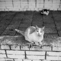 *********** :: alex_belkin Алексей Белкин