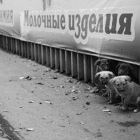 молочные изделия :: Алексей Наумов