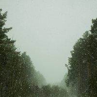 Прогулка по лесу :: Юрий Залипаев