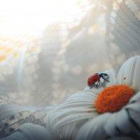 лето в доме :: Тася Тыжфотографиня