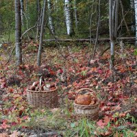 Про осень, грибы и радость :: Татьяна Ломтева