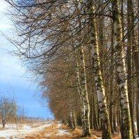 Еще в полях белеет снег :: Наталья Лунева