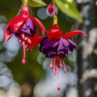Вот такие цветы... :: Валерий Пегушев
