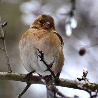 Птичка :: Oleg Khot