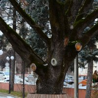 Дерево использовали рационально :: Oleg Khot